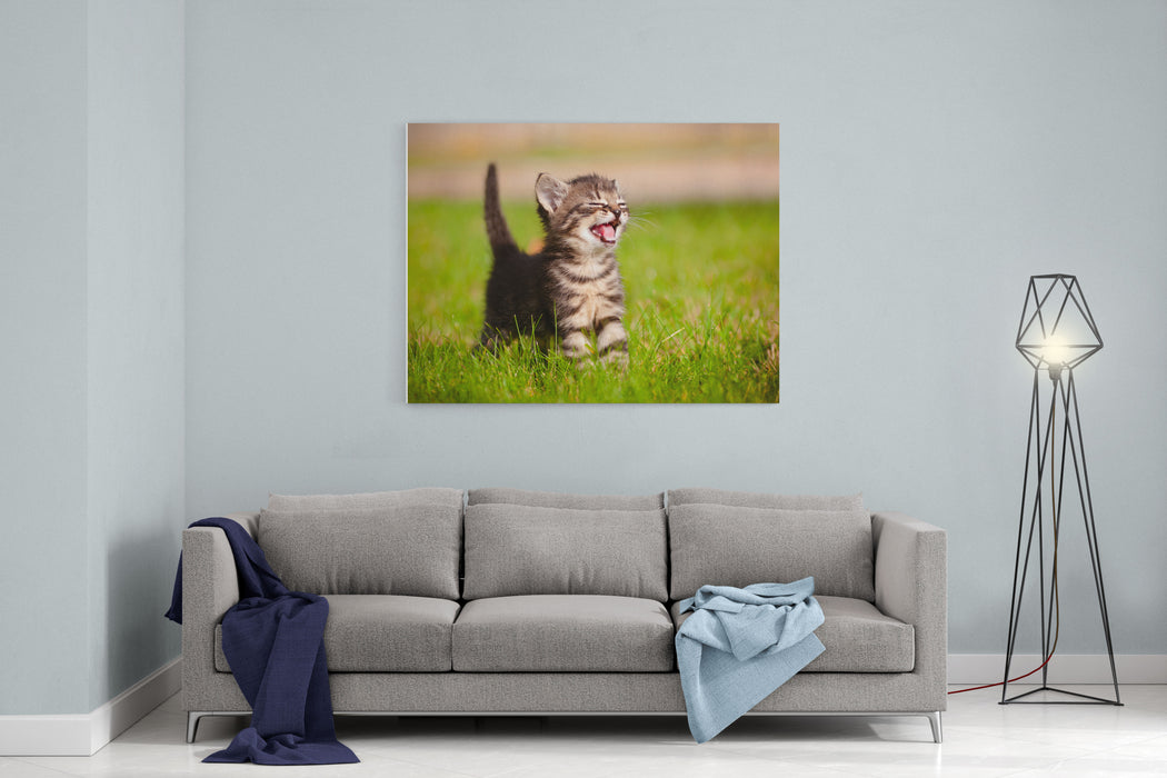 Adorable Meowing Tabby Kitten Outdoors Canvas Wall Art Print