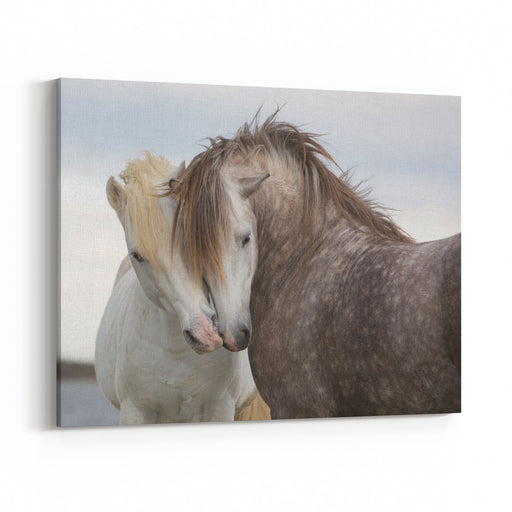 A Pair Of Horses Kissing With Their Heads Leaning On One Another Canvas Wall Art Print