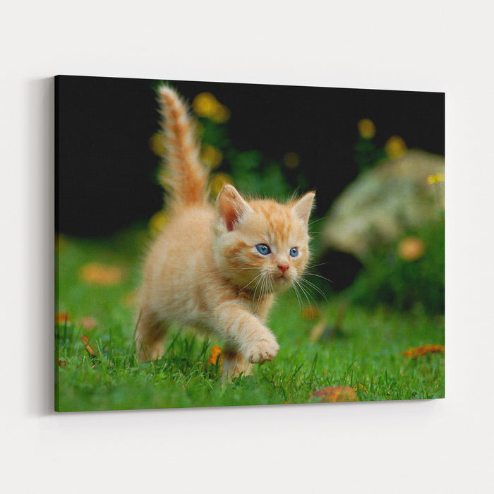 Young Cat Canvas Wall Art Print