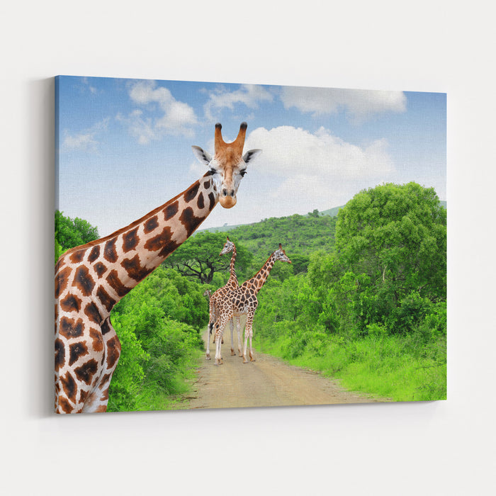 Giraffes In Kruger Park South Africa Canvas Wall Art Print