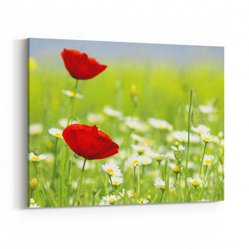 Red Poppy And Wild Flowers Canvas Wall Art Print