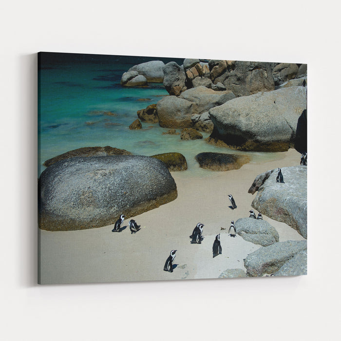 African Pinguins At Bolders Beach In South Africa Canvas Wall Art Print