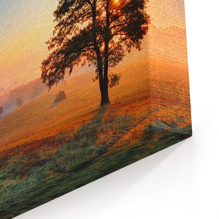 Alone Tree On Meadow At Sunset With Sun And Mist Canvas Wall Art Print