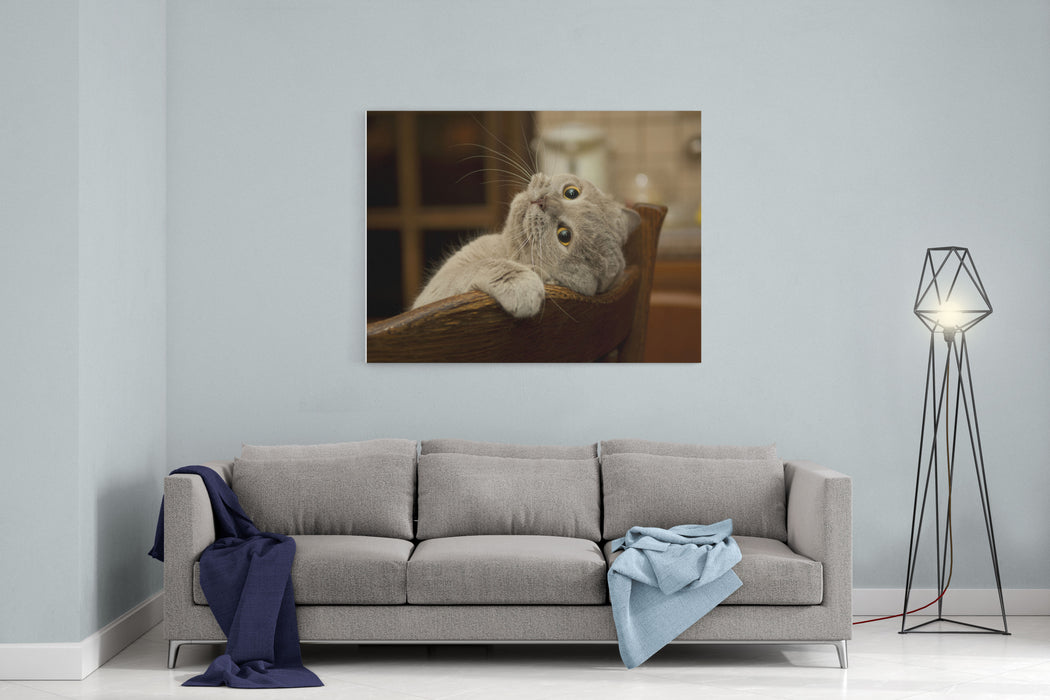 Closeup Of The Cat Is Played Naughty Cats Look Cat British Shorthair In Funny Pose Canvas Wall Art Print