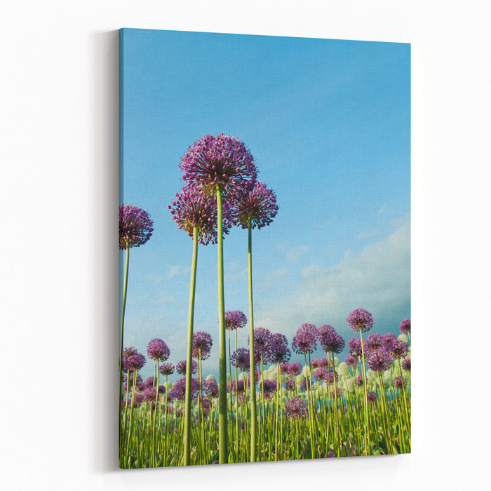 Field Of Purple Alliums Reaching Into Blue Sky Vertical Canvas Wall ...