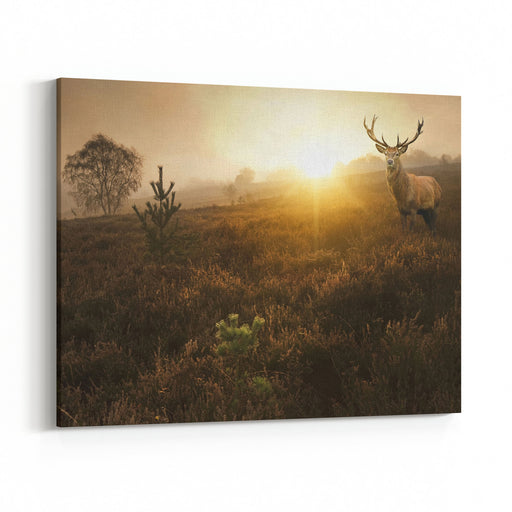 Beautiful Forest Landscape Of Foggy Sunrise In Forest With Red Deer Stag Canvas Wall Art Print