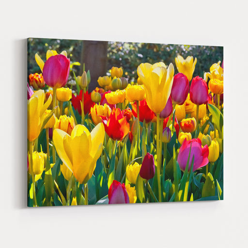 Colorful Tulips In The Park Spring Landscape Canvas Wall Art Print
