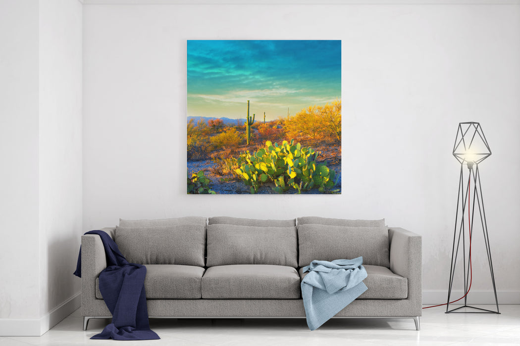 Picturesque, Serene Sunset In Saguaro National Park  Sonoran Desert  American Southwest Canvas Wall Art Print