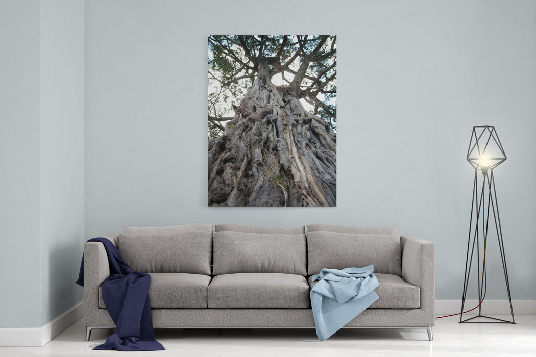 Ancient Olive Tree In The Masai Mara Reserve Kenya Canvas Wall Art Print