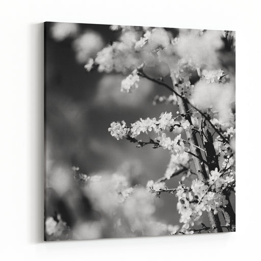 Cherry Blossoms Canvas Wall Art Print