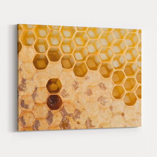 Full And Empty Honeycomb Close Up Canvas Wall Art Print
