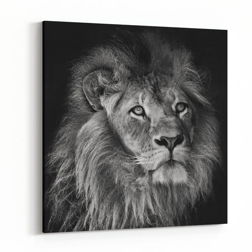A Black And White Portrait Of Of A Male Lion With Mane On A Dark Background Canvas Wall Art Print