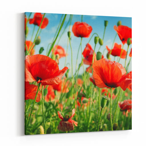 Poppies On Green Field Canvas Wall Art Print