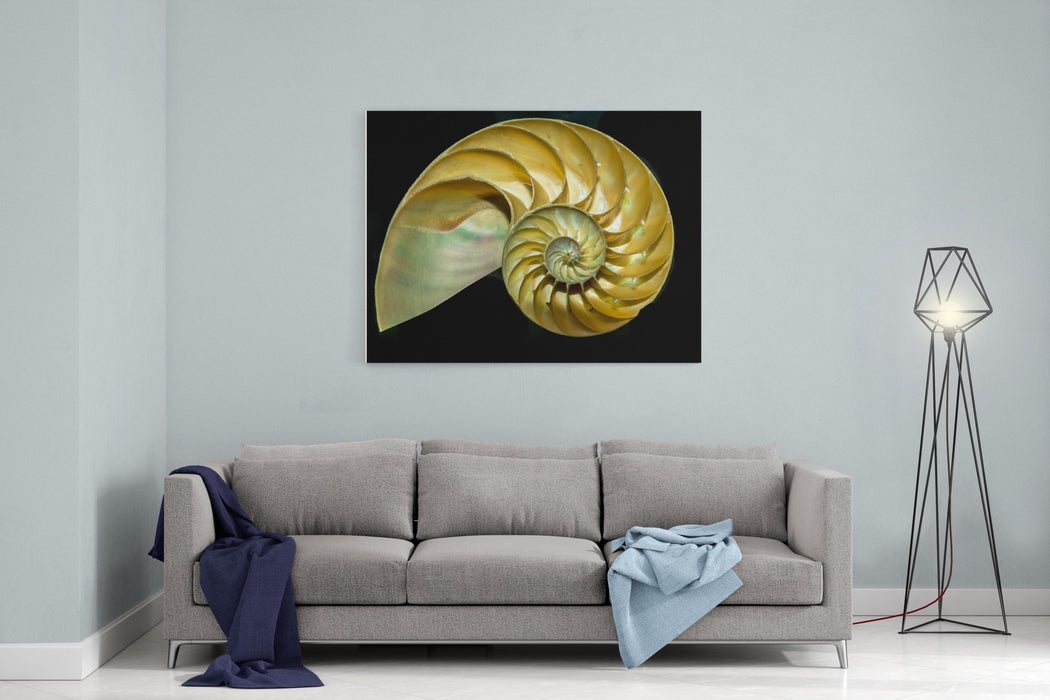 A Cutaway Nautilus Shell Demonstrates The Mysterious Geometric Growth Patterns Known As The Golden Spiral, Or Fibbonachi Ratio Canvas Wall Art Print