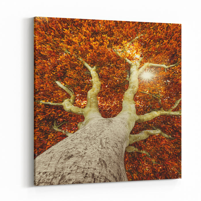Old Tree In Autumn Canvas Wall Art Print