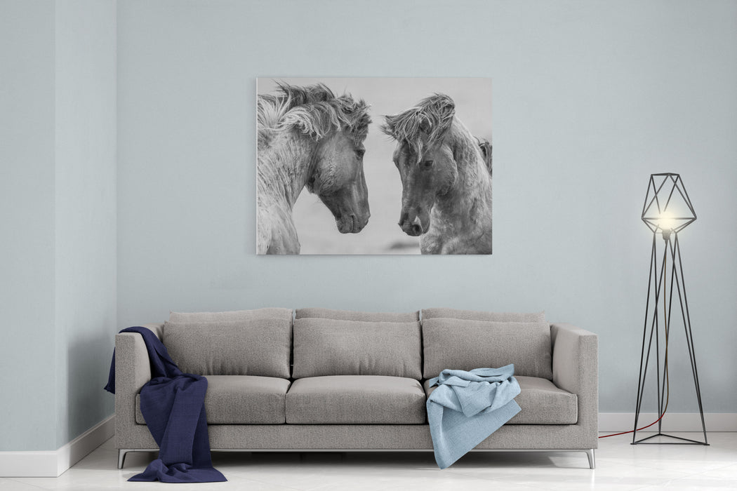 Fighting Horse Canvas Wall Art Print