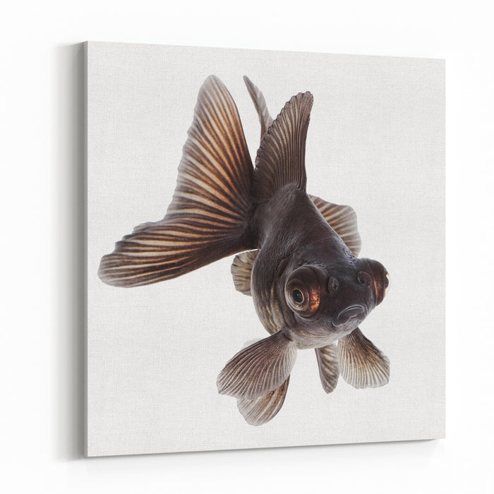Brown Goldfish Isolated On White Background Without Shadow Canvas Wall Art Print