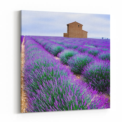 Lavender Field Canvas Wall Art Print