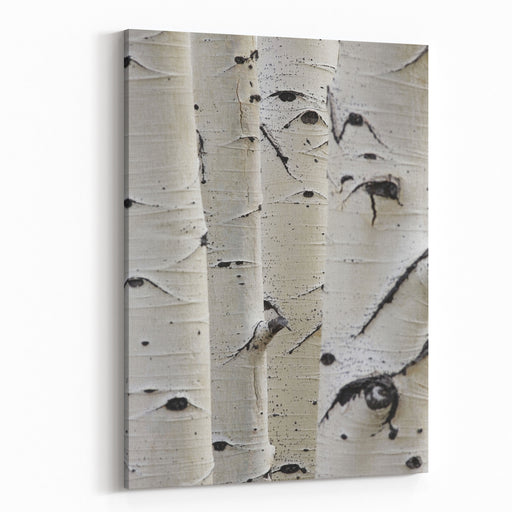 Birch Trees In A Row Closeup Of Trunks Canvas Wall Art Print