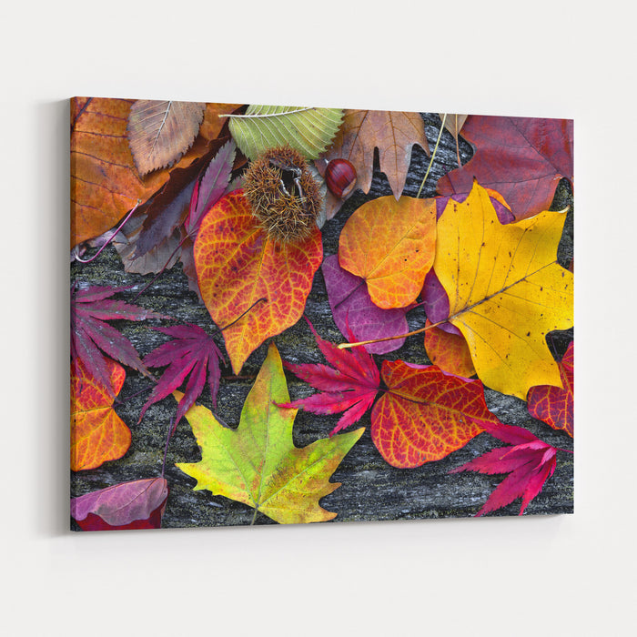 Abstract Background Of Autumn Leaves Autumn Background Canvas Wall Art Print