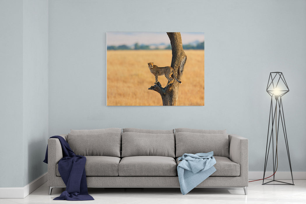 Young Cheetah In The Tree In Masai Mara, Kenya Canvas Wall Art Print