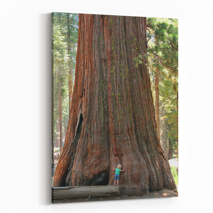 Baby And The Giant Little Toddler Girl Hugging The Giant Sequoia Man And The Nature Concept Canvas Wall Art Print