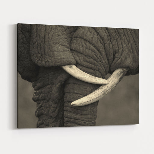 This Amazing Photo Of Two Elephants Interacting Was Taken On Safari In Africa The Black And White Conversion Enhanced The Feel Canvas Wall Art Print