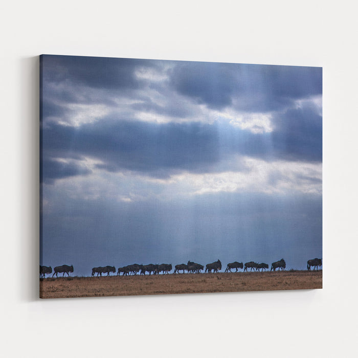 Crossing Wildebeest Canvas Wall Art Print