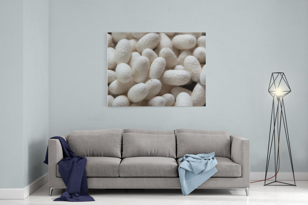 These Are Many Silkworm Bombyx Mori Cocoons This Is A Natural Source Of Silk Before Its Processed Canvas Wall Art Print