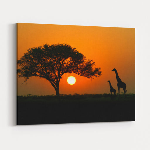 Acacia Tree, Sunset And Giraffes In Silhouette In Africa Canvas Wall Art Print