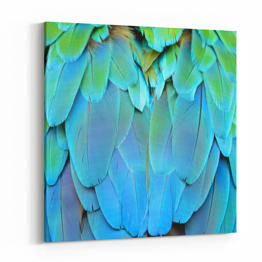 Colorful Feathers, Harlequin Macaw Feathers Background Texture Canvas Wall Art Print