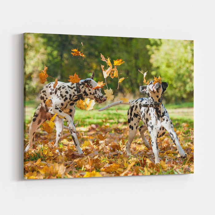 Two Dalmatian Dogs Playing With Leaves In Autumn Canvas Wall Art Print