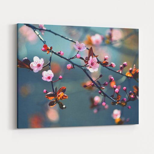 Beautiful Flowering Japanese Cherry  Sakura Background With Flowers On ASpring Day Canvas Wall Art Print