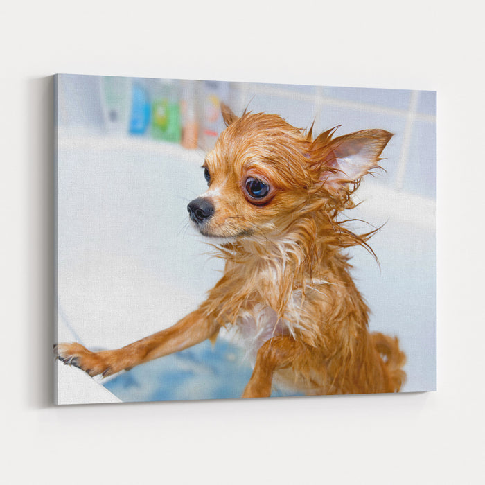 Funny Wet Chihuahua Dog In Bathroom Canvas Wall Art Print
