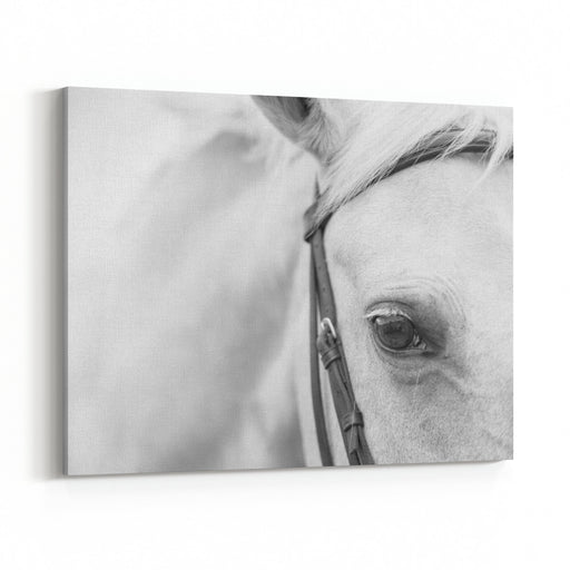 A Close Up Landscape Black And White Image Of The Eye, Head, And Shoulders Of A Palomino Horse Canvas Wall Art Print