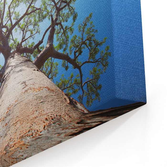 Baobab Tree With Green Leaves On A Blue Clear Sky Background Madagascar Canvas Wall Art Print