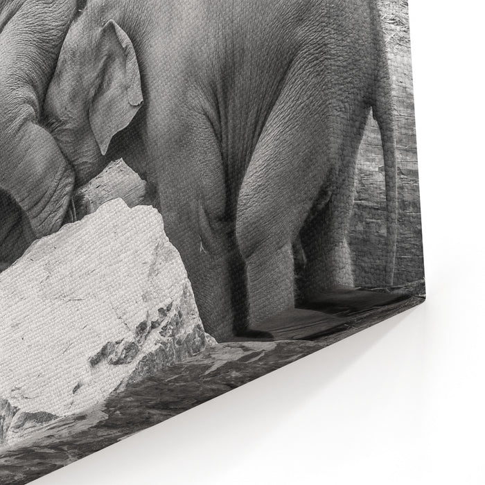 A Helping Trunk Canvas Wall Art Print