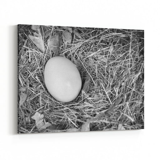 A Single Fresh Egg Sits In A Natural Nest In Black And White Canvas Wall Art Print