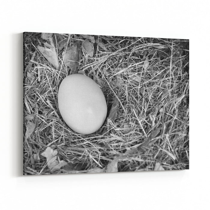 A Single Fresh Egg Sits In A Natural Nest In Black And White Canvas ...