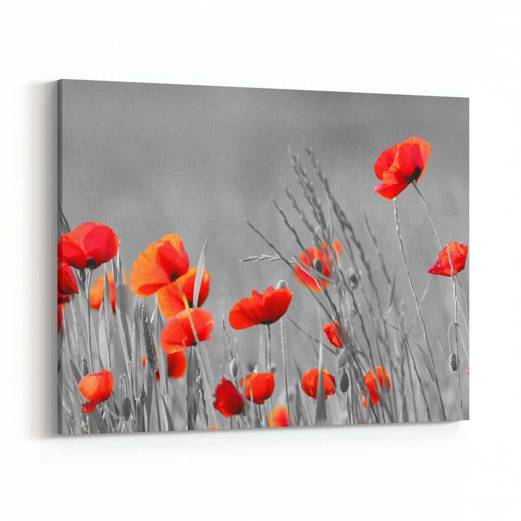 Red Poppy Flowers With Black And White Background Canvas Wall Art