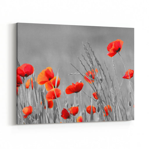 Red Poppy Flowers With Black And White Background Canvas Wall Art Print