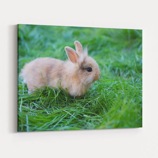 A Bunny Sitting On Green Grass Canvas Wall Art Print