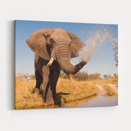Elephant Spraying Water With His Trunk Canvas Wall Art Print