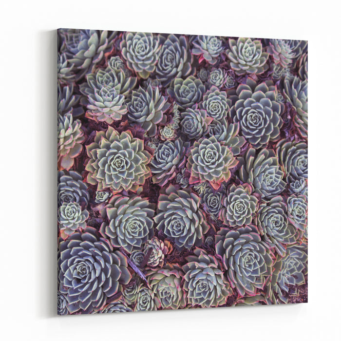 Dainty Succulents With Thick Skin Or Protective Coating That Actually Seals In Moisture And Minimizes Evaporation Create Delightful Textured  Garden Plants For Dry Situations Canvas Wall Art Print