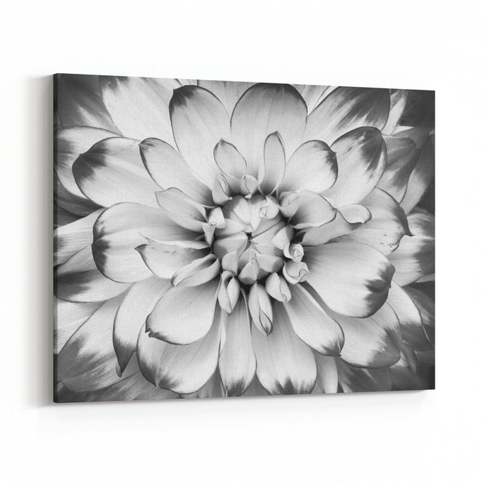 Black And White Macro Shot Of Flower Canvas Wall Art Print ...