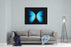 BLUE MORPHO Canvas Wall Art Print