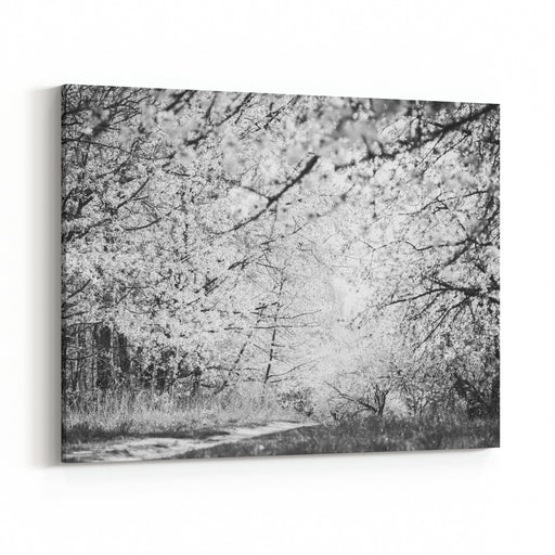 Blooming Spring Garden Black And White Photography Canvas Wall Art Print