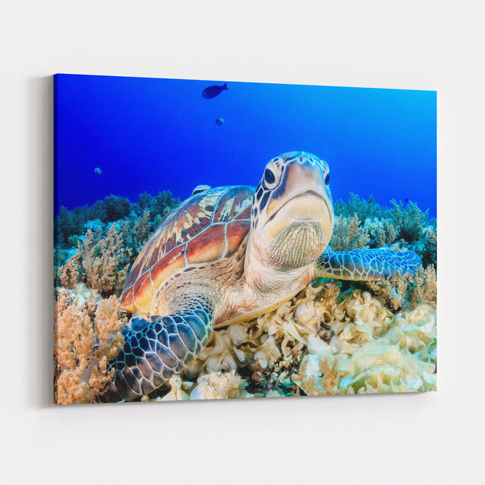 Green Turtle On The Sea Bed Canvas Wall Art Print