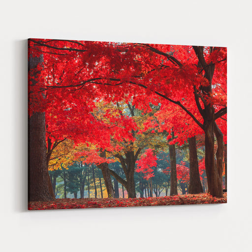 Autumn In Nami Island Canvas Wall Art Print