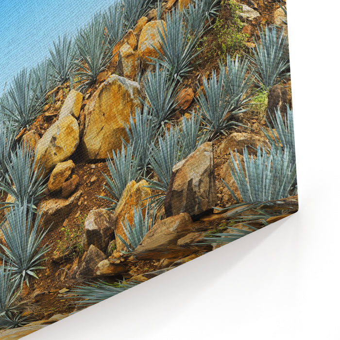 Agave Tequila Landscape To Guadalajara, Jalisco, Mexico Canvas Wall Art Print